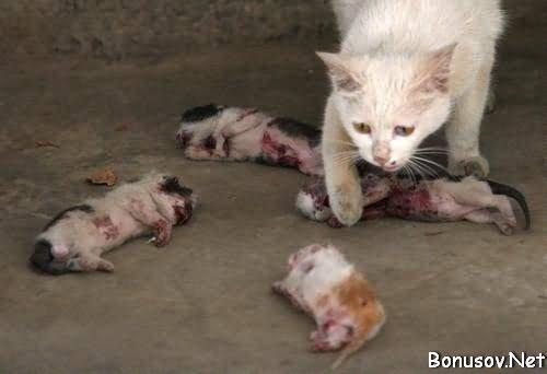Мертвые котята